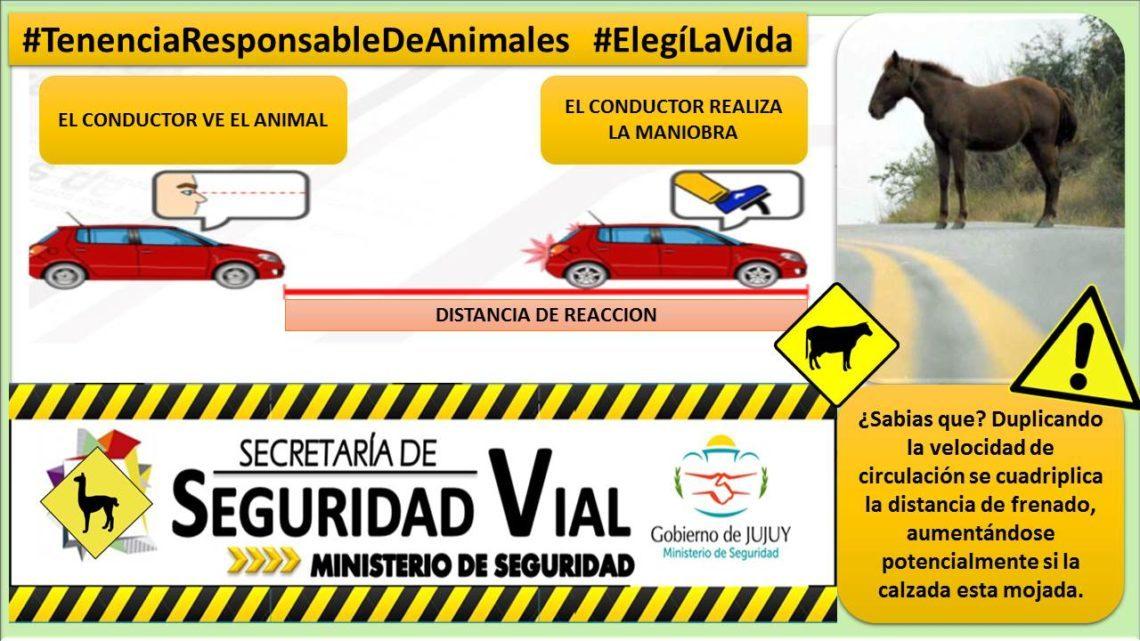 Informe De Siniestralidad Animales Sueltos Ministerio